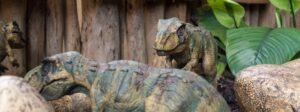 Book & Activity: How Do Dinosaurs Eat Their Food? (Printable)