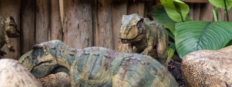 how do dinosaurs eat book